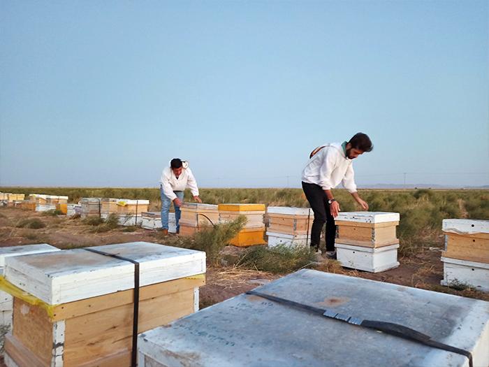 عسل اصل و صد در صد طبیعی کشمون
