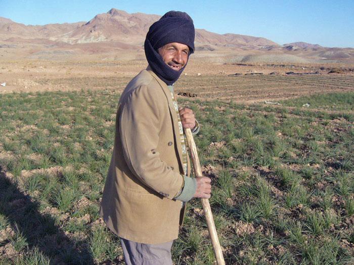 خرید زعفران کشاورز محمدرضا زارعی