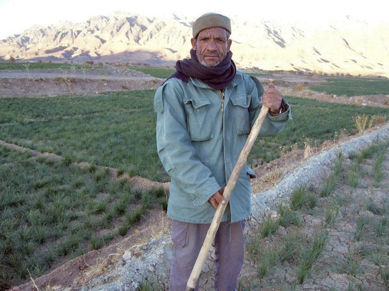 خرید زعفران از کشاورز