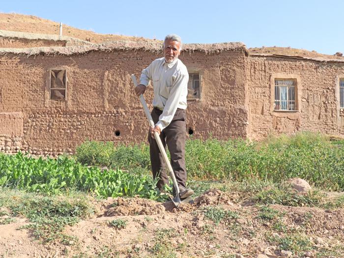 کشاورز زعفران