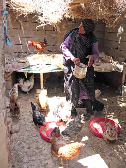 کشاورز زن