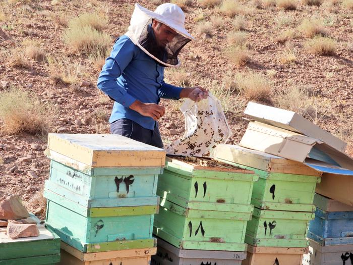 عسل صد در صد طبیعی