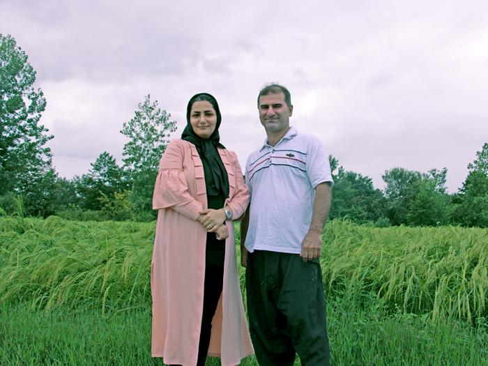 برنج ایرانی کشمون