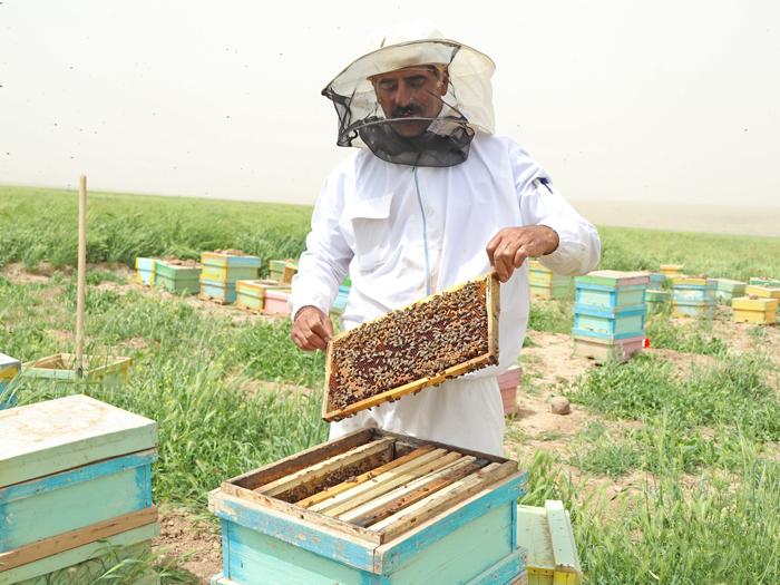 عسل آزمایش شده کشمون