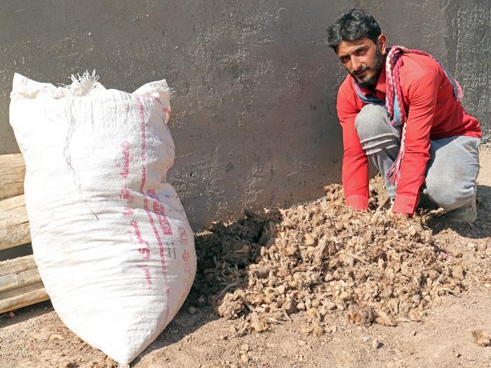 کشاورز زعفرانکار