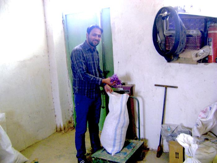 زعفران کشاورز