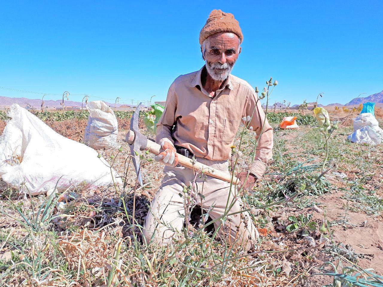 خرید از کشاورز