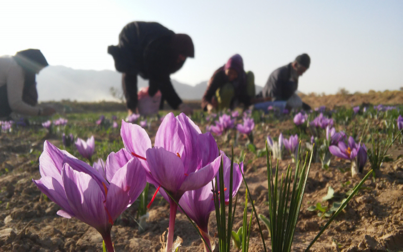 Quality Saffron: A Journey to the East